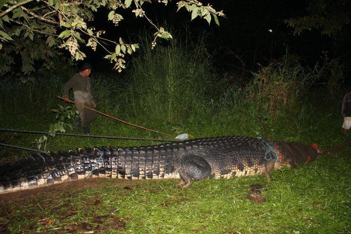 giant crocodile philippines