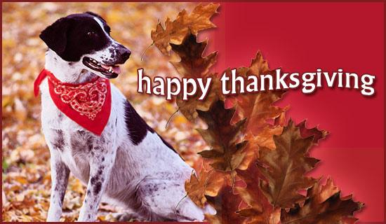 http://2.bp.blogspot.com/-3eQibk9ryZk/UK4ongVFvMI/AAAAAAAAAgI/9UIGwkVQKm4/s1600/thanksgiving-dog.jpg