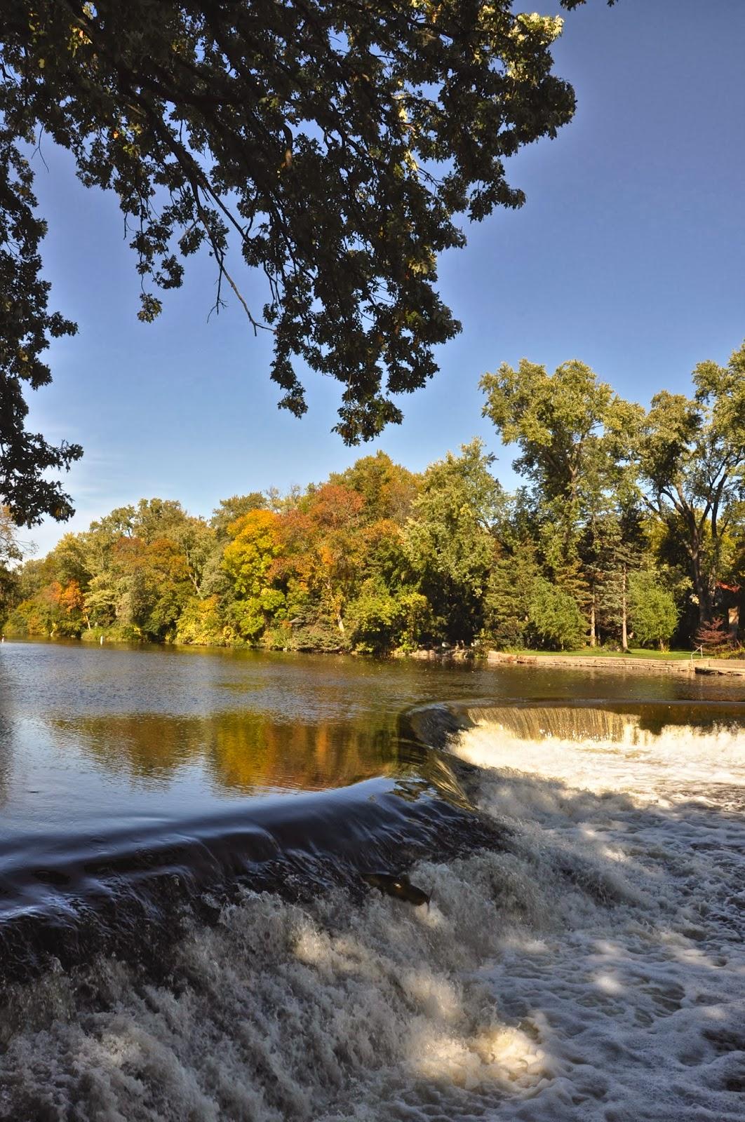 Milwaukee area parks salmon run on the river for Milwaukee river fishing