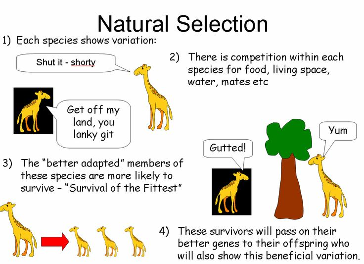 Inheritance Of Acquired Characteristics And Natural Selection Are Both