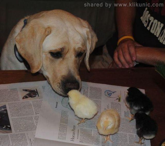 http://2.bp.blogspot.com/-3exW2z8FKrg/TXzG00WIo2I/AAAAAAAARGY/oNZmnQ1MlMM/s1600/these_funny_animals_635_640_37.jpg