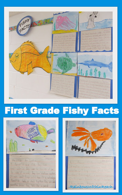 photo of: First Grade Bulletin Board of Fishy Facts (from Bulletin Board RoundUP via RainbowsWithinReach)