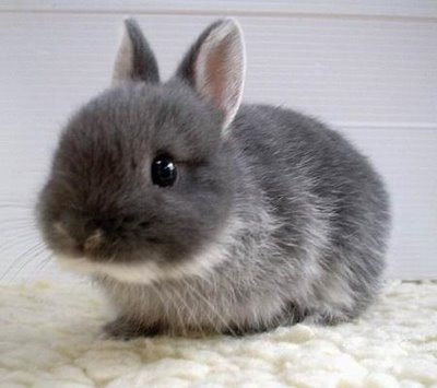 Cute Rabbits 20 Cute bunny pictures...
