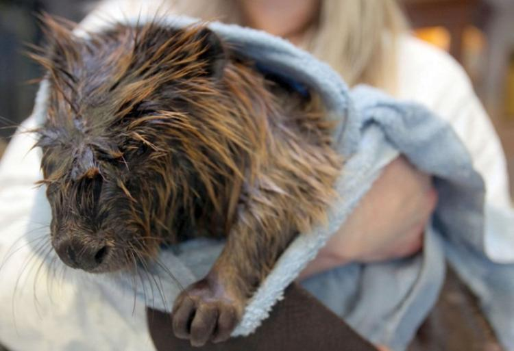 beaver-dam-chevron-012813.jpg
