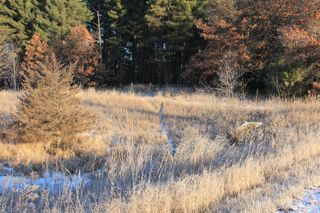 photo of deer trail through field in early winter