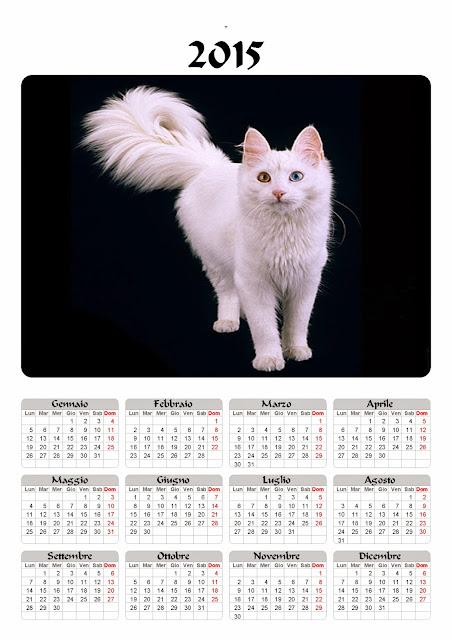 calendario 2015 gatto angora_turco