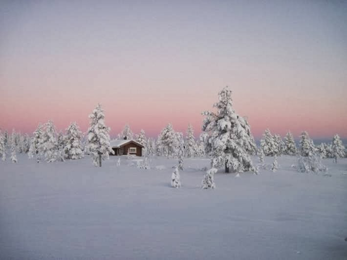 Norwegian Boreal Forest