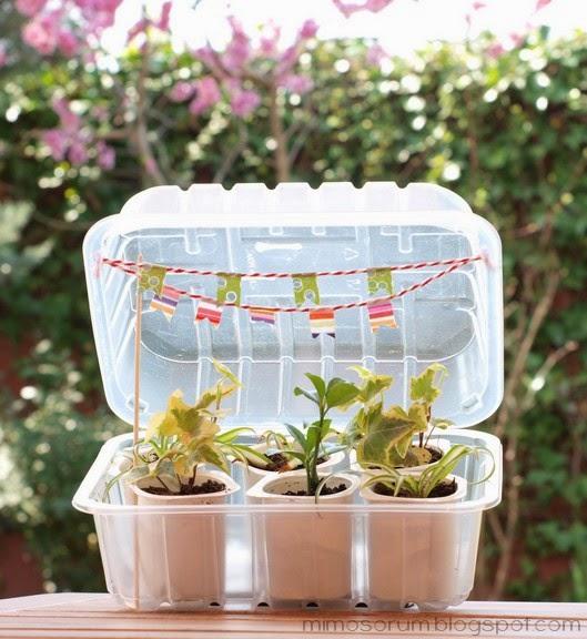 Mimosorum c mo hacer un invernadero casero diy make a - Mini invernadero casero ...