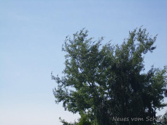 7 Sachen- Neues vom Schloß, jomilija.blogspot.de