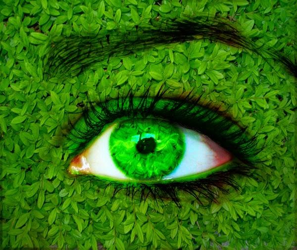 Beautiful Natural Green Eye Wallpaper