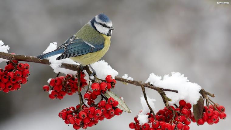 Cand m-am trezit n zori ningeai si lin,pe ram de gand mi te-asezai!!!