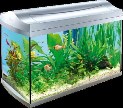 Acquistare acquari online occasioni deal for Comprare pesci online