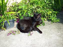 E este era o meu negro gato...