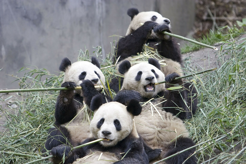 Eco business environmental management green bamboo