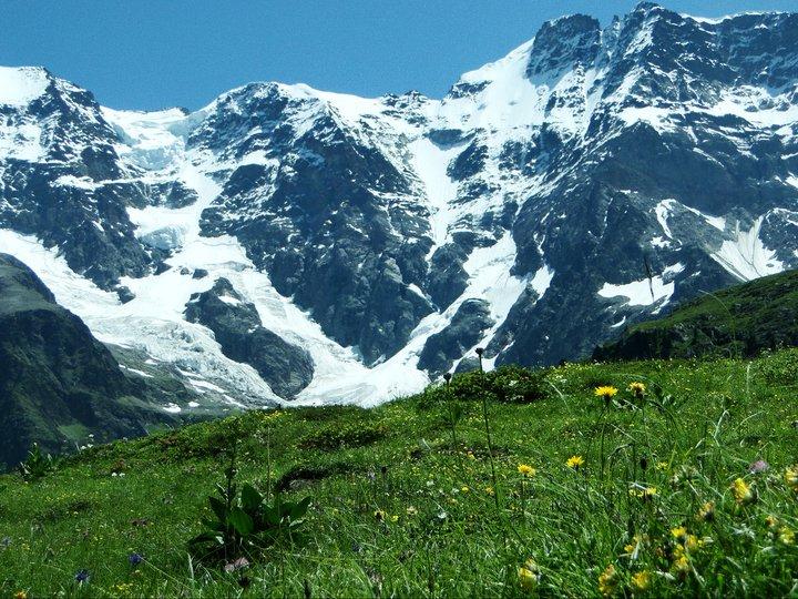 Pin Alpine Biome on Pinterest