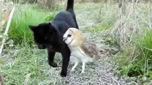 Excellent une chouette et un chat sont les meilleurs amis du monde !