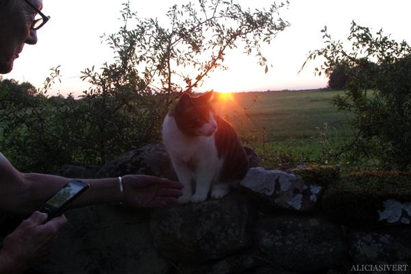 aliciasivert, alicia sivert, sivertsson, gotland, semesterlivet, solnedgång, katt, cat