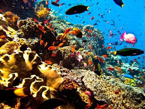 keindahan bawah laut karimunjawa