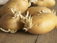 5 Makanan Mematikan yang Ada di Dapur Anda, Semua wajib baca
