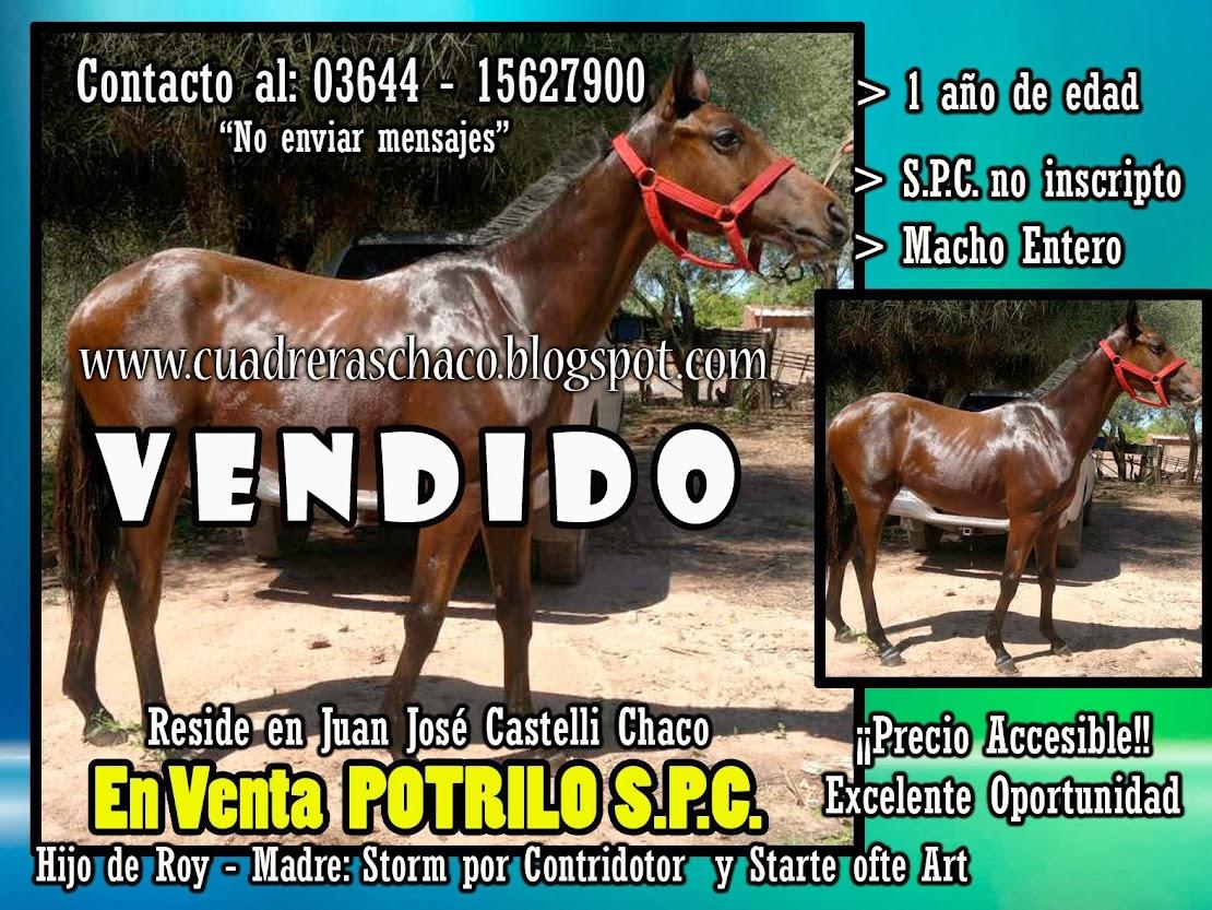 POTRILLO EN VENTA 19-11