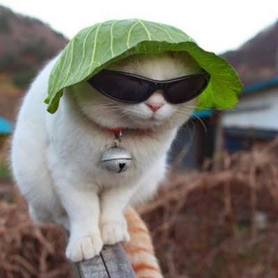 kucing lucu pakai topi