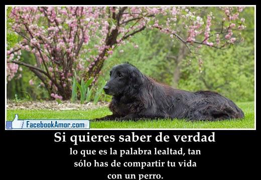 Frases BONITAS con Imágenes on Pinterest Frases  - fotos de animales con frases bonitas