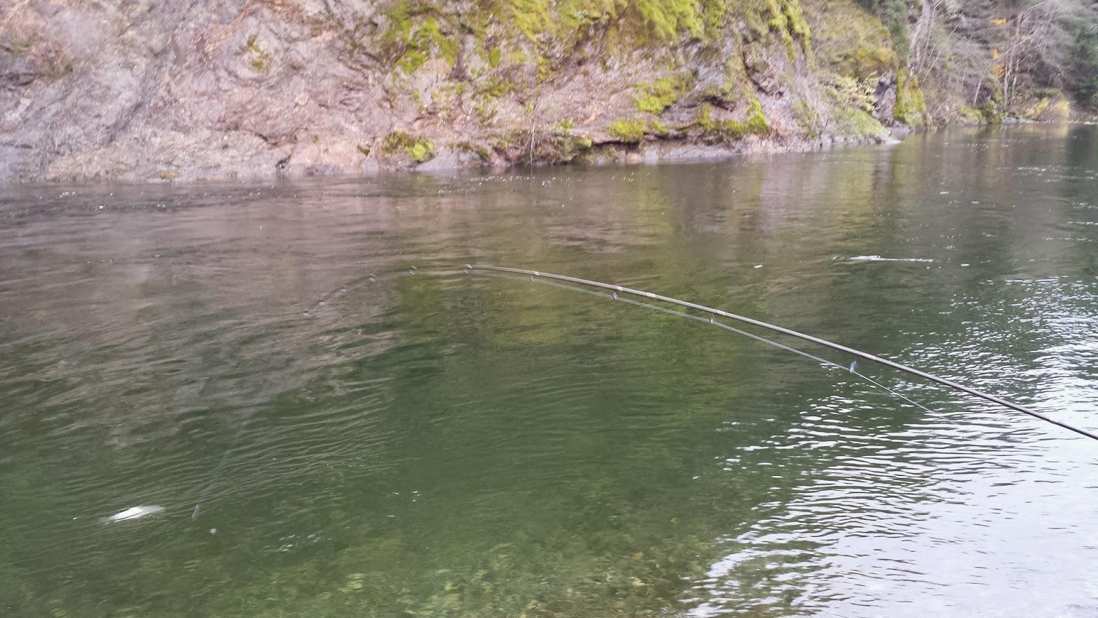 Guided salmon and steelhead fishing on the rogue umpqua for Rogue river oregon fishing