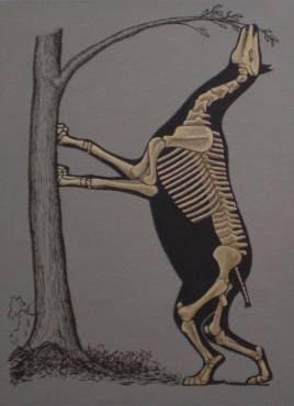 Borissiaka squeleton