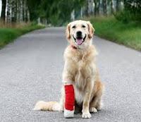 Sơ cứu kịp thời cho chó