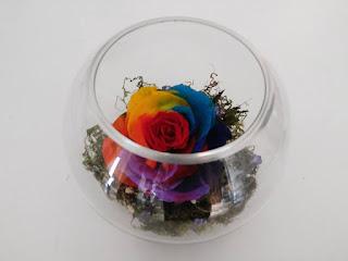 Rosas Circo Payaso Multicolor Naturales Preservadas ¡Duran 4 Años! Santa Ana, El Salvador
