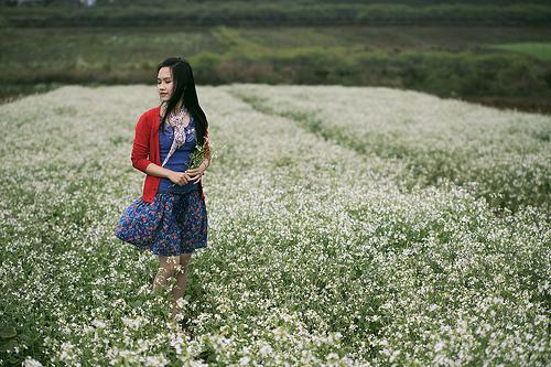 Thiên đường hoa cải ở bản Ba Phách