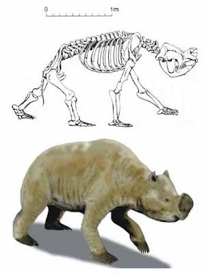 prehistoria en australia Zygomaturus