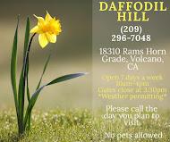 Daffodil Hill ~ Open Mon-Sun