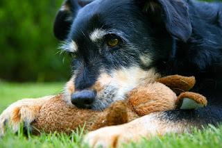 Why Should I Adopt a Senior Dog?