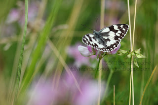 macro insecte photo papillon noir et blanc photographie les insectes