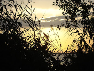 Albufera Sunset behind trees Photo - El Saler - Valencia - Spain