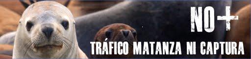 Alerta: inminente matanza de lobos marinos en Chile