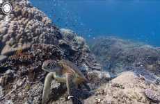 Primeras imágenes submarinas en Google Maps.