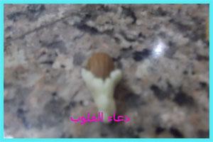 حلاوي مغربية باللوز للعيد 2013   4