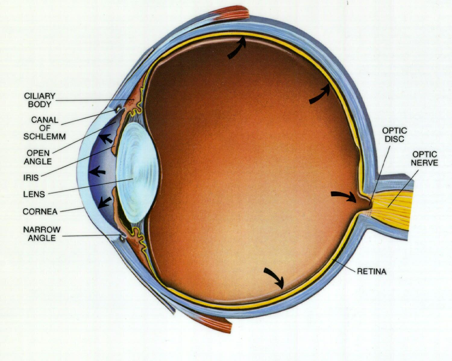 What Does Glaucoma Look Like