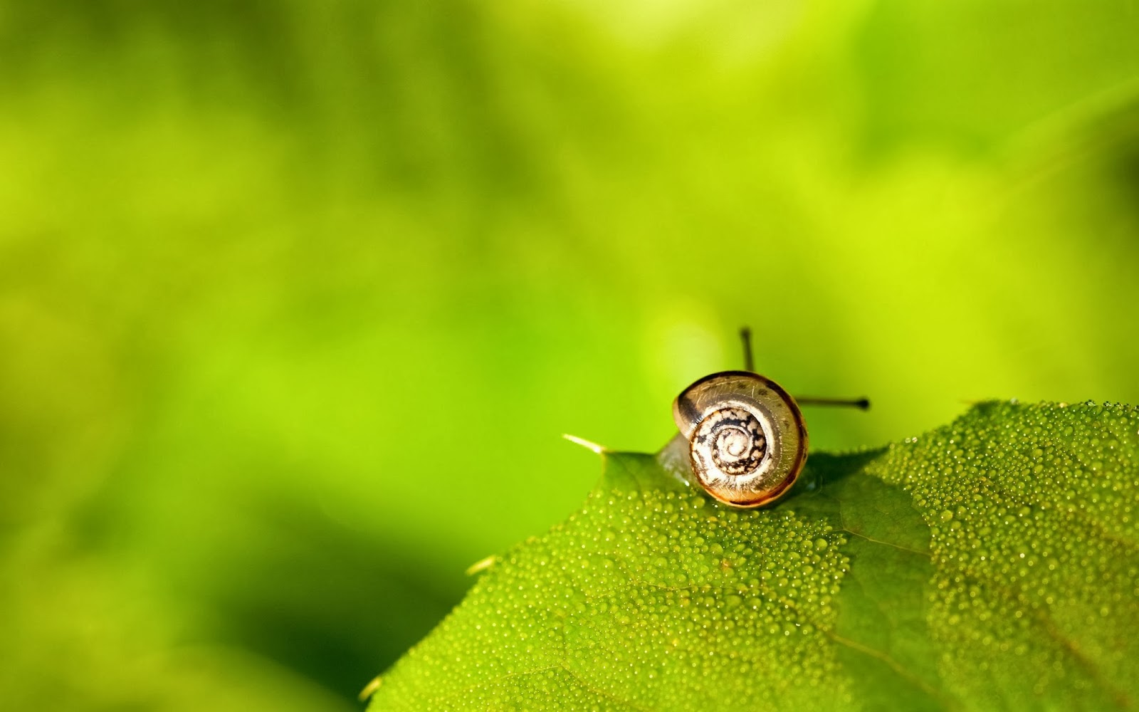 Cute Snail Wallpaper