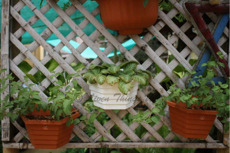 Liven Things Up Gardening in Small Spaces Simple Vertical