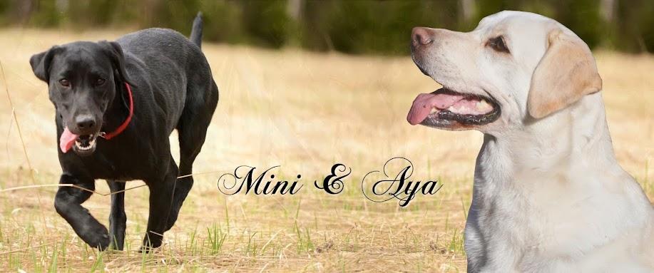 Mini & Aya