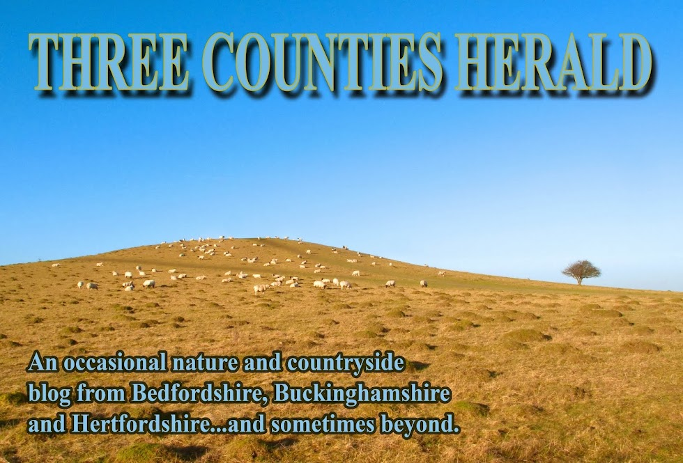 Three Counties Herald