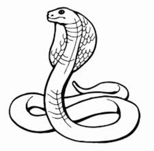 Anaconda Coloring Page