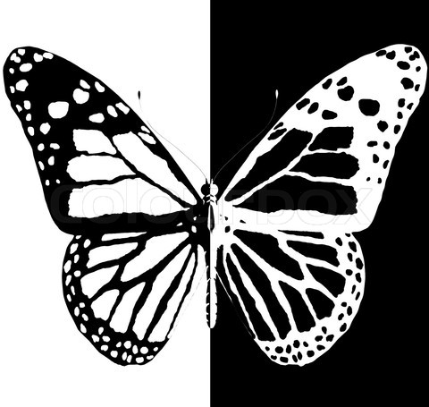 silhouette of butterfly on a black and white background