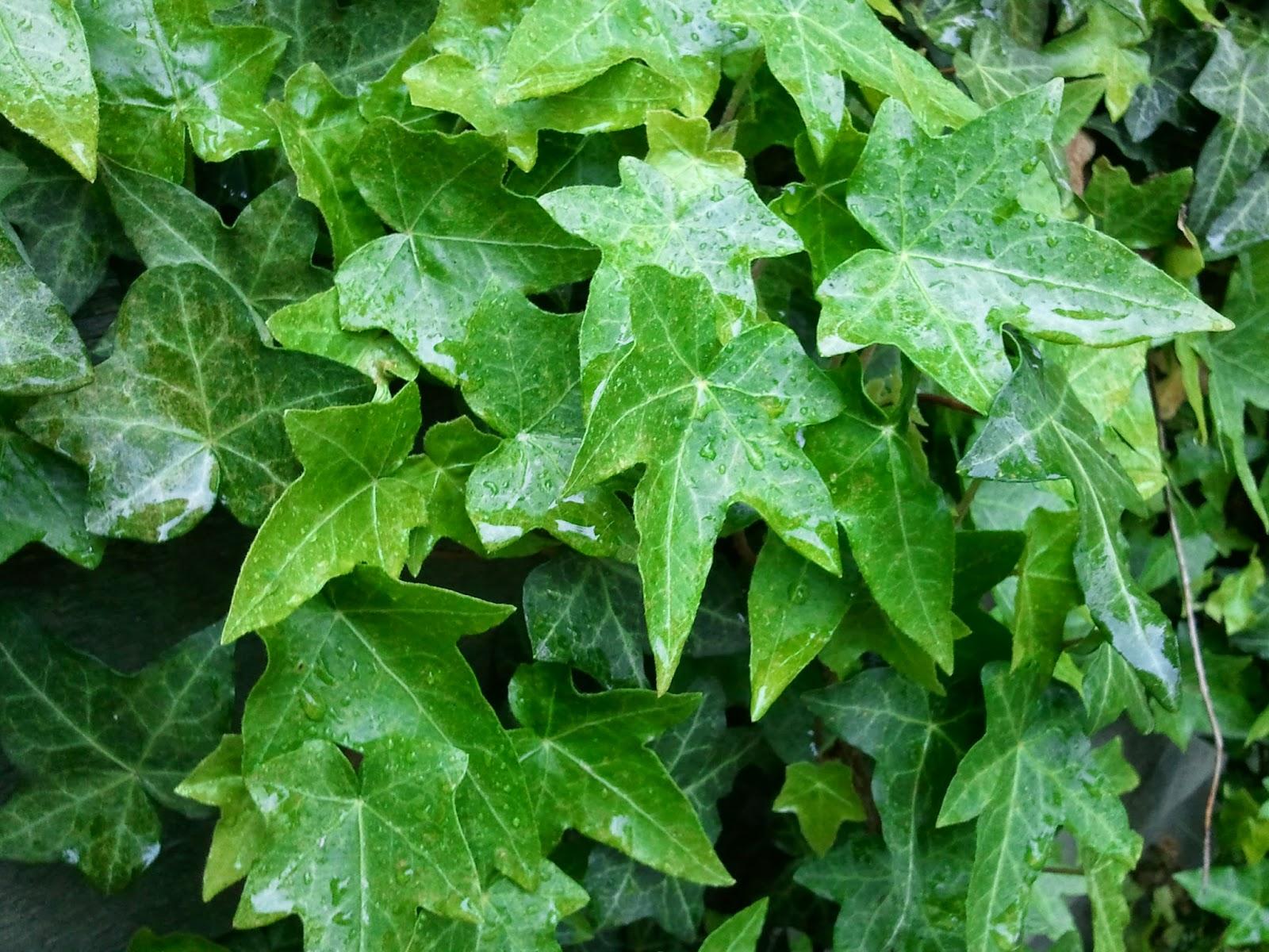 Foliage, Texture