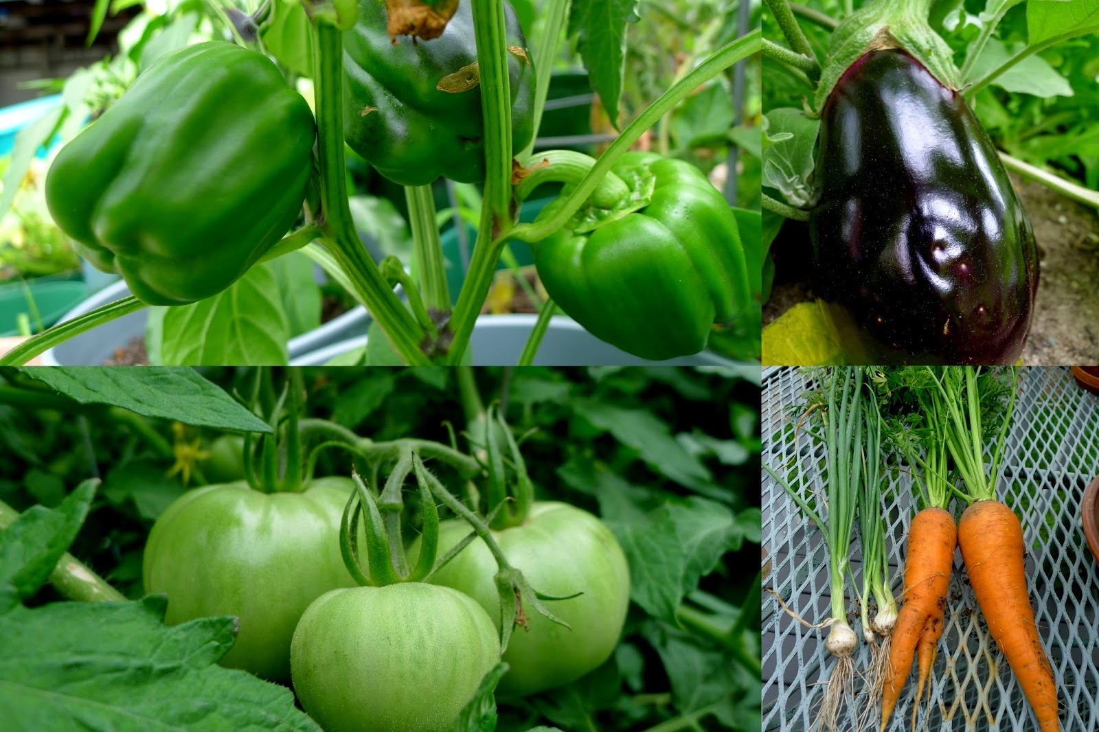 Summer produce, urban farming