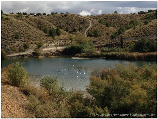 pantano y patos