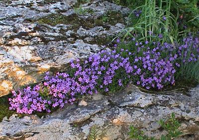 Disfrutar con el huerto y el jard n mayo 2013 - Plantas para el jardin todo el ano ...